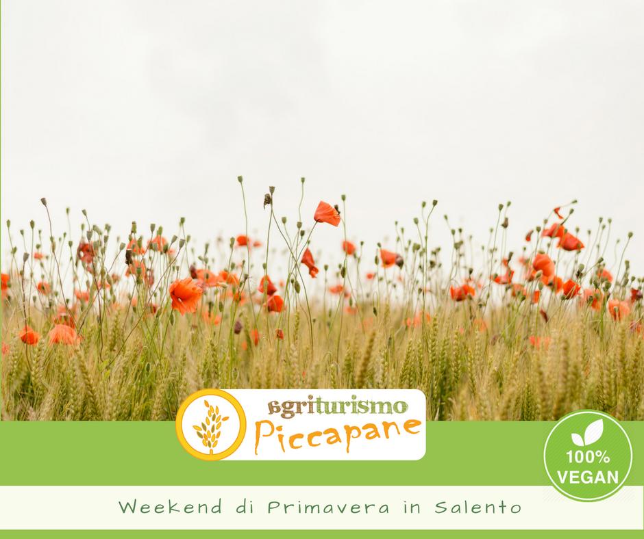 Offerte Agriturismo in Salento: vacanza eco-biologiche ...